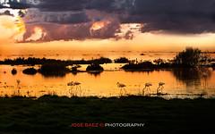 Atardecer en la Laguna de Fuente de Piedra (Jos Bez) Tags: laguna mywinners lagunadefuentedepiedra josbez fotosdeestepa lagunadefuentedepiedraflamencos