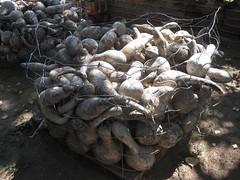 gourds - 2