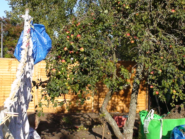 Apple tree and washing