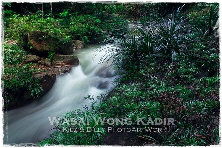 wasai 3
