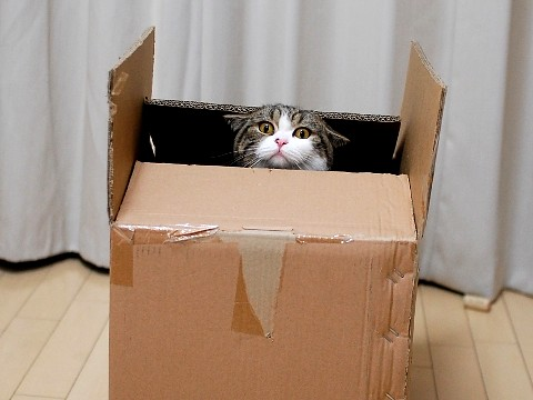 cute maru the cat in a large box