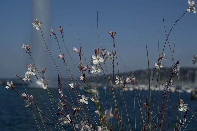Jet d'eau behind flowers