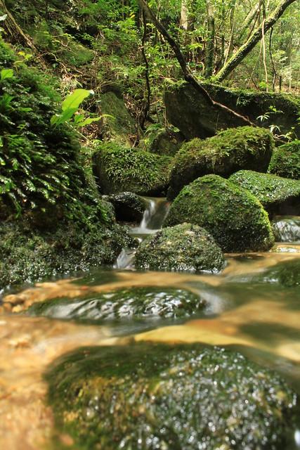 尾之間から蛇之口の滝の登山道にて in Yakushima 2