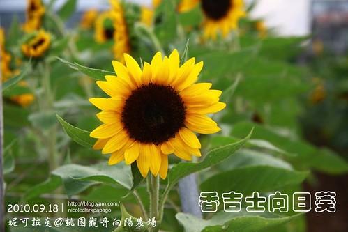桃園觀音向陽農場20100918-092
