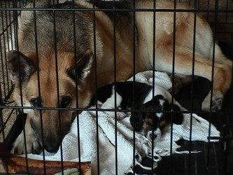 German Shepherd and Beagle in Crate