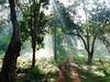 Another road less travelled (tomato umlaut) Tags: morning sun india mist jungle karnataka brhills naturesfinest digitalcameraclub supershot biligiri platinumphoto anawesomeshot colorphotoaward flickrdiamond theunforgettablepictures magicunicornverybest magicunicornmasterpiece