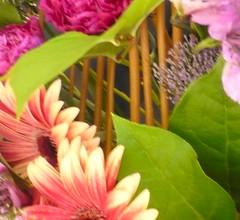 Estructura de forma de pentagrama (artesaniaflorae) Tags: de ramo con estructura floraldesign pentagrama artefloral artfloral httpwwwartesaniafloraecom jukkaheinonen flowersfloresflorskukkiafleurbluemen2010