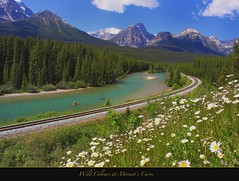 "Wild Colours at Morant's Curve (Joalhi ""Around the World"") Tags: flowers wild canada daisies train alberta banff morantscurve bowvallyparkway coth5"