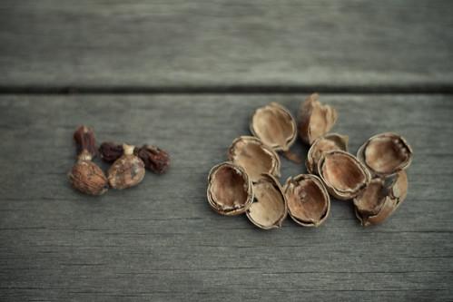 acorn piles