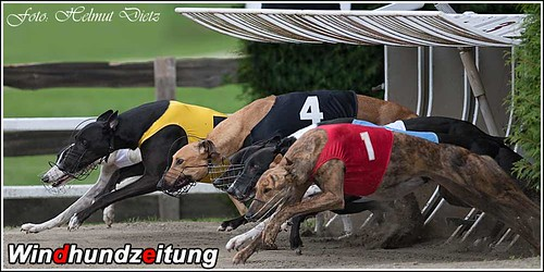 Greyhound Racing - Rabapatona: CGRC Euro Derby - Race10 - Saturday