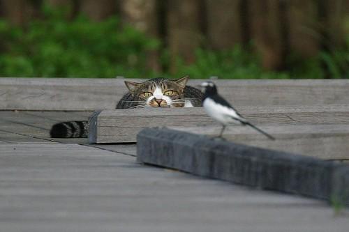 盯上你了!!