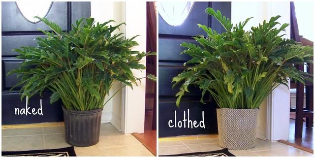 planter collage