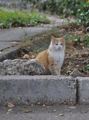 Севастопольский кот №2