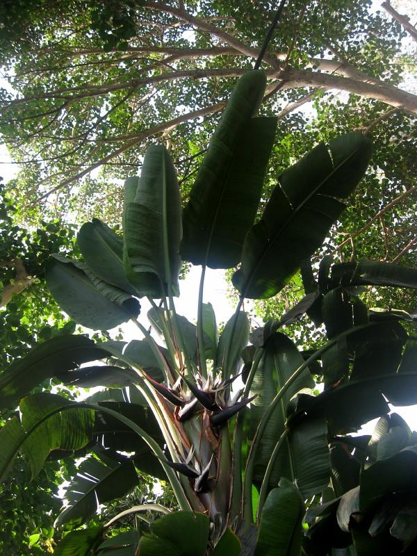 30-09-2010-birdofparadise-palms-trees