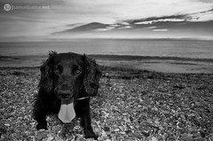 Dog Days (samueljustice.net) Tags: sea sky blackandwhite bw dog white black beach animal fun sand stones pebbles tired sb800
