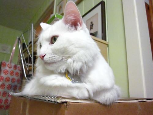 Loafcat.