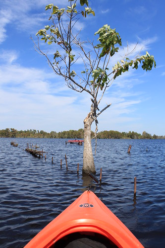 Kayaking - Pasquotank River - River Tree (Portait)