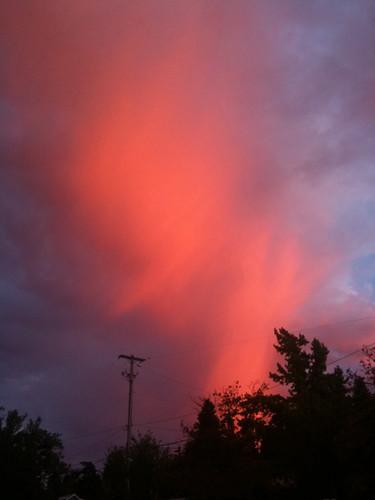 Heaven's blush