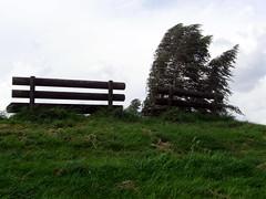 Parkbank auf dem Deich (Nefesh*) Tags: autumn winter tree leave season spring ast sommer laub herbst jahreszeit blatt baum frhling stamm c530 olympusfe310 x840 nefesh1