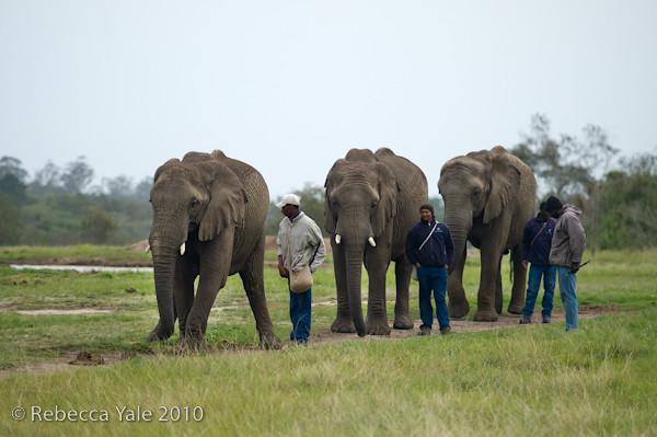 RYALE_Elephant_Sanctuary_1