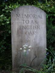 Winterbourne Botanic Garden, Birmingham, UK (Defining Moments Images) Tags: uk english garden oak birmingham memorial botanic winterbourne
