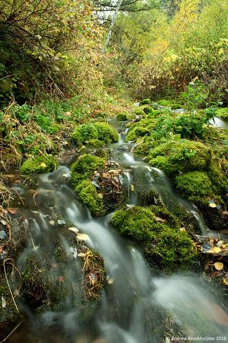 Moss Creek