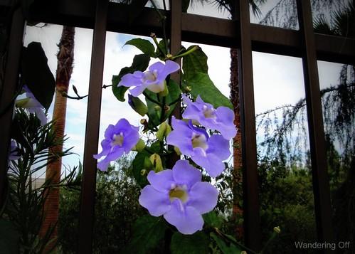 Flowers in LA