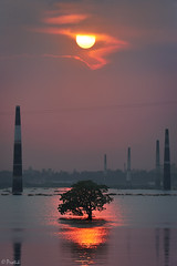 The Invincible (protikH) Tags: sunset cloud sun tree water ripple dhaka bangladesh flooded brickfield
