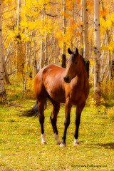 Beautiful Autumn Horse