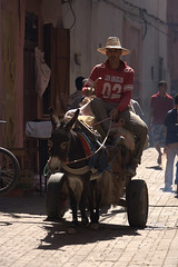 And donkey does the graft!. (foto.pro) Tags: work donkey morocco marrakech labour souks toil