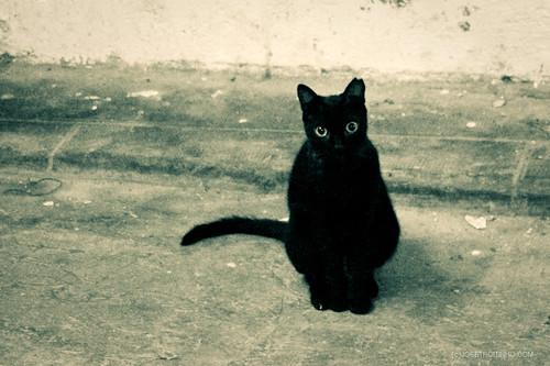 Negro - Black