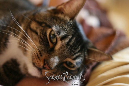 The Wonder Cat