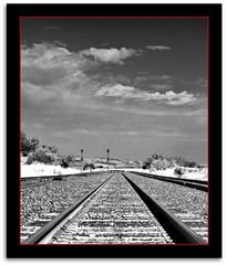 Empty (scrapping61) Tags: california bw monochrome traintracks martinez legacy tqm 2010 whiterose tistheseason swp artphotography norules photographicexcellence yourpreferredpicture scrapping61 stealingshadows outstandinglandscapes naturelive highenergyplaces showthebest daarklands finestimages trolledproud crazygeniuses nullerzgallery tqmexcellence exoticimage heavensshots pinnaclephotography dlstorybook
