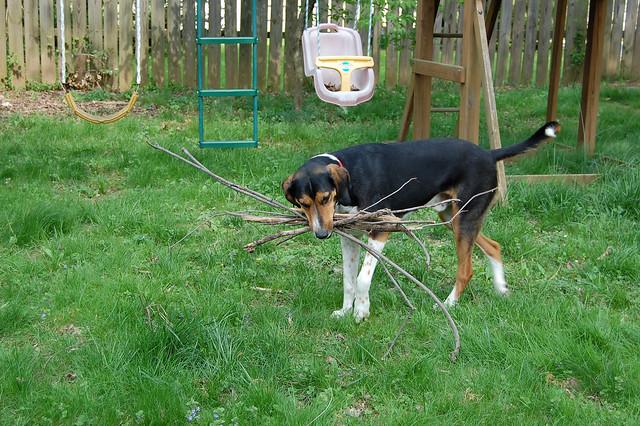 sticks!