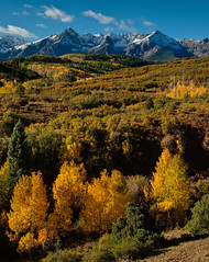 Gold And Snow On Dallas Divide (Mike Berenson - Colorado Captures) Tags: trees snow fall nature water leaves