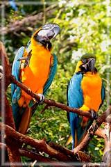 IMG_9158 (vhanENRIQUEZ) Tags: zoo parrot safari seoul southkorea everland