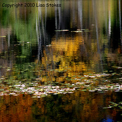 Kettle Lake Reflection (Lisa-S) Tags: autumn ontario canada color colour reflection fall water colorful lisas colourful provincialpark foiliage forksofthecredit caledon kettlelake blueribbonwinner 50d 2213 theunforgettablepictures platinumheartaward copyright2010lisastokes gappool