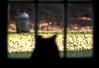 Master Birdwatcher (mjkjr) Tags: atlanta grass canon rebel bokeh availablelight atl wildlife lawn dslr telephotolens 2010 schrodinger 135l cowetacounty potn october13 550d t2i ef135mmf2lusm clubsi httpwwwflickrcomphotosmjkjr october132010