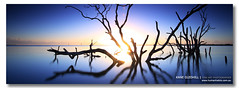 Dive In ([ Kane ]) Tags: ocean longexposure morning trees sky sun cold colour tree wet water sunrise reflections landscape photography dawn manly australia brisbane flare qld kane hotspot deadtrees gledhill seq kanegledhill