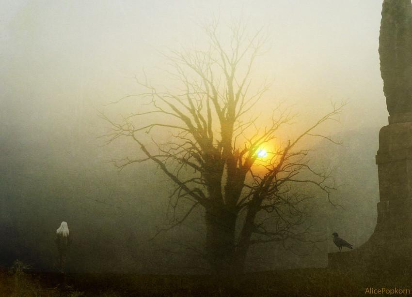 bright light in the dark. into the mist dark visits bright light in night of soul sv4 t