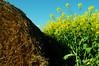 paleta (nachoizu) Tags: amarillo nubes campo cielos camioneta fardo balcarce colza nokon sierreas estanciera d5000