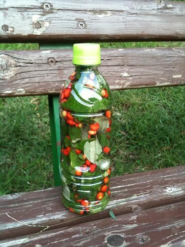 誰かがペットボトルに木の実をつめている。なんだかほっこりする。