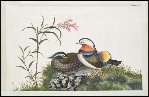 Bird Album d