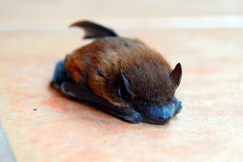 Mini Bat Mask Tutorial Maker Mama