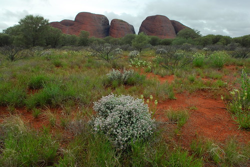 Kata_Tjuta_day_3 038