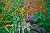Beech climb (13) (jcw1967) Tags: trees house tree climb rope 山 beech fagus harewood sylvatica abseil 毛 climbtree 绳子 子 绳 johnwaller shānmáojŭ 山毛榉 榉 shéngzi 攀登爬 pāndēngpá