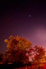 Tree light (indykaleu) Tags: longexposure trees tree fall night rural canon stars eos midwest indiana noflash fallfoliage foliage nighttime 30d canoneos30d delwarecounty indykaleu