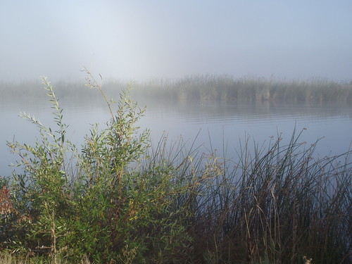 Fall River in the Mist