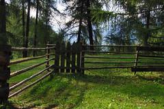 Schatten im Lrchenwald (mikiitaly) Tags: italy sommer wiese gras zaun schatten sdtirol altoadige flickrfotos lrchenwald elementsorganizer