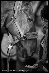 CSO Maisons Laffite Bruno LUSCHER ( Phi Bokeh  dood) Tags: pictures horses bw horse cheval jumping phi bokeh nb concours bruno addict chevaux luscher cso equitation maisonslaffitte brunoluscher addictpictures citducheval phibokeh concoursdesaut